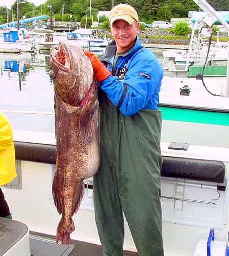 A MAJOR ling cod!