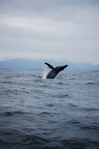 Whale 10 - Big Blue Fisheries - Sitka, Alaska
