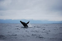 Whale 16 - Big Blue Fisheries - Sitka, Alaska