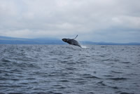 Whale - Big Blue Fisheries - Sitka, Alaska