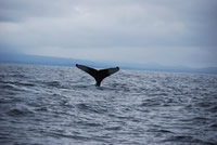Whale 4 - Big Blue Fisheries - Sitka, Alaska