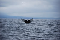 Whale 5 - Big Blue Fisheries - Sitka, Alaska