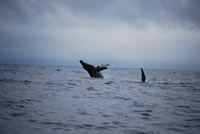 Whale 6- Big Blue Fisheries - Sitka, Alaska