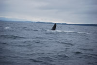 Whale 9 - Big Blue Fisheries - Sitka, Alaska
