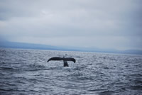 Whale 2 - Big Blue Fisheries - Sitka, Alaska