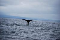Whale 3 - Big Blue Fisheries - Sitka, Alaska