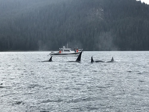 Beautiful, but not what you want to see while salmon fishing