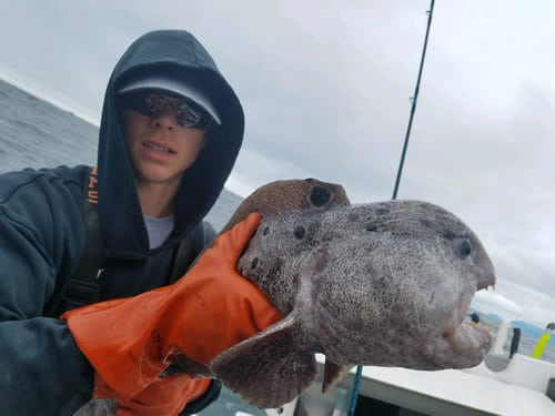 Ermit and a Wolf Eel